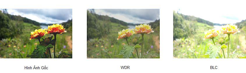 So sánh HLC - BLC -WDR